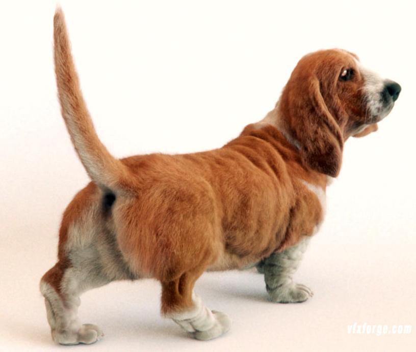 Fur: Basset Hound